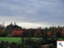 The field and beautiful autumn trees in Chimay
